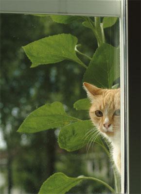astma katt symptom